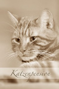 Katzenpension Dinslaken